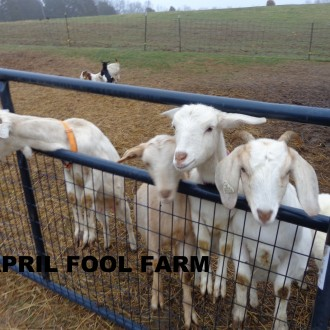 March 4, 2016 Pictures of Farm 'Critters'