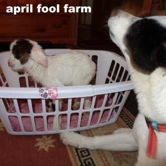 Ziva and Fred (the baby goat)